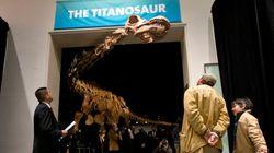 【世界最大級の新種恐竜】巨大すぎて博物館の展示室に入りきらない