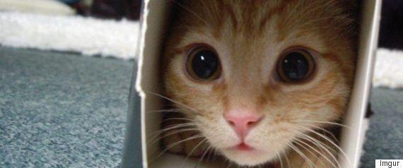 車庫のシャッターにはさまった猫、ご近所総がかりで救出(画像)