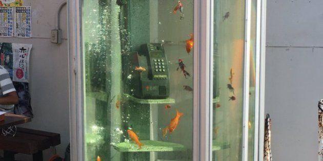 人類滅亡後の世界みたいだ。電話ボックスの中を泳ぐ金魚たち