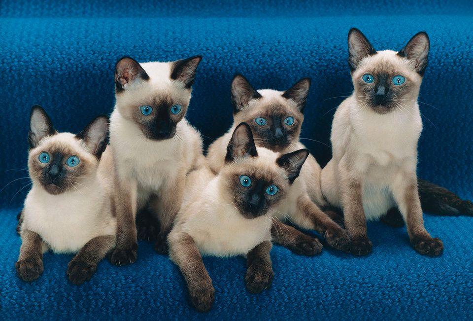 ネコ写真のパイオニア 95歳の写真家が撮った猫たちはこんなに色鮮やか(画像)