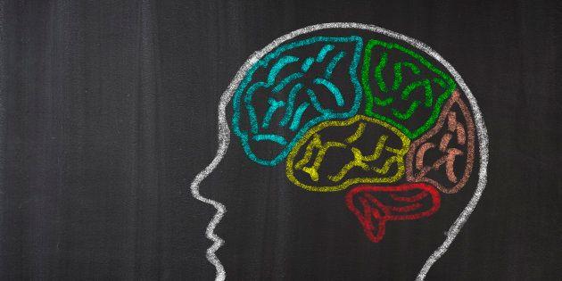 Human Brain Lobes on