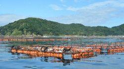 ASCが環境に配慮したブリ・スギ類の養殖基準を公表
