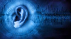 騒音性難聴発症のカギ握るタンパク質を発見 東北大、防衛医大グループ