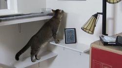 猫は複雑な機械も使いこなすのさ エサのためなら【動画】