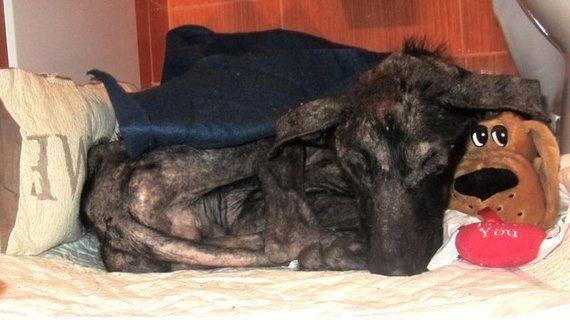 餓死寸前の犬を救ったのは、ほんの少しの愛だった。2カ月で劇的に変わる(画像)