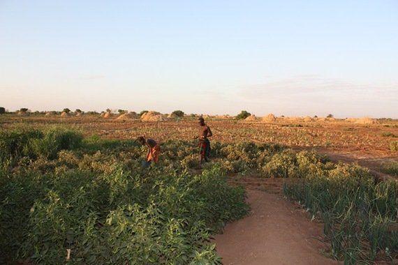 大規模農場の建設ラッシュと牧畜民のくらし――エチオピアにおけるランド・グラブの現在