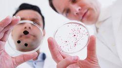 変化する食餌と、腸内微生物相に与える影響