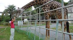 地震被害で休園が続く熊本市動植物園の今は
