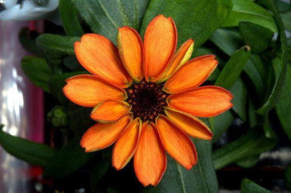 宇宙で初めて花が咲く。ISS長期滞在のスコット・ケリー飛行士が栽培、火星での食物栽培にも希望