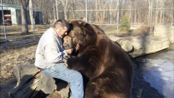 うわああ。世界最大種のヒグマが男性とじゃれ合ってる(動画)