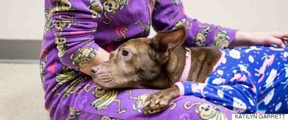 ホノルルの動物保護施設が「保護動物ゼロ」に 最後の養子となった犬に温かい送別式(動画)