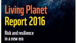 自然の豊かさは58%消失『生きている地球レポート2016』を発表