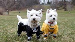 「犬はどうパンツを履くべきか」論争、いよいよ決着か