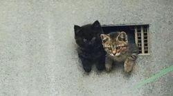 子猫が2匹、小さな穴から顔を出した(画像)