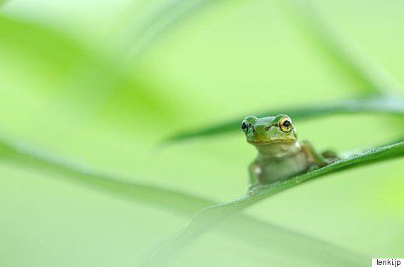 二十四節気の一つ「啓蟄(けいちつ)」 冬眠していた動物たちが活動し始める春へ