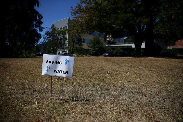 干ばつのカリフォルニアで急成長「芝生を緑に塗る」ビジネス