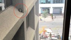 アライグマの赤ちゃん、ビルの外壁で動けなくなる 必死の救出劇の結果は......(動画)