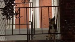 犬は、主人の帰りを待ち続けた。