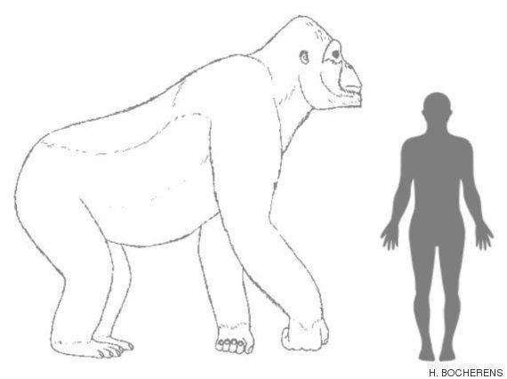 「実在したキングコング」絶滅の理由は美女じゃなかった(研究結果)