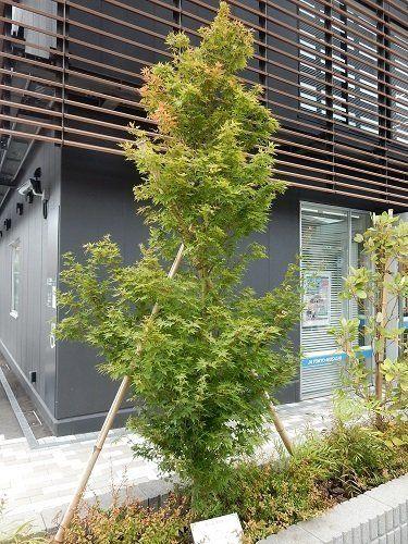 「道路の森」は見果てぬ夢か/コンパクト化へ動き出した街路樹