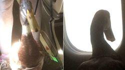 飛行機の隣の席にアヒルが座ってる...えっ、どういうこと?【動画】