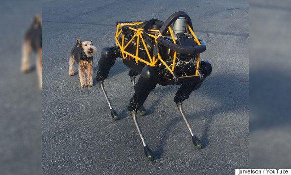 「ロボット犬」Spotと本物の犬コスモがバトル。勝敗のゆくえは?(動画)