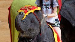 最も残酷な10の動物アトラクション〜客の笑い声の裏には動物虐待があった