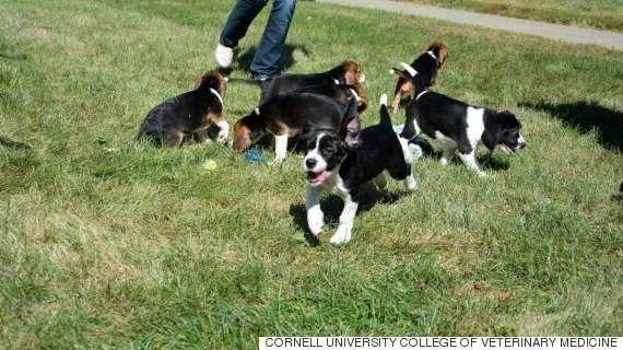 世界初、体外受精で生まれた子犬たちはものすごく愛らしい