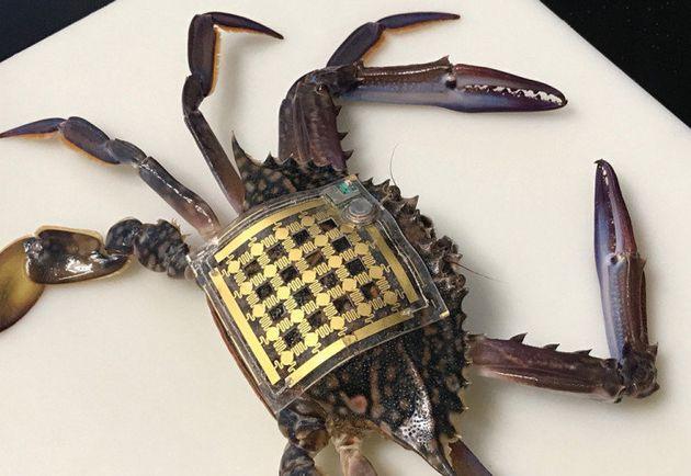 海洋動物用の小型ウェアラブル端末、わずか12ドル 何に使われる?
