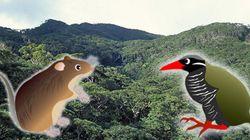 オキナワトゲネズミなど41種が新たに「国内希少野生動植物種」に指定