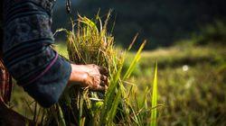 農業分野での「外国人労働者」受け入れに5つの質問