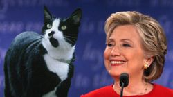 「トランプ氏は猫動画を普及させる」クリントン氏が非難...ってどういうこと?