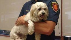 火事で救出された犬のジャック 蘇生に使用されたのは、特別な機器だった(感動)