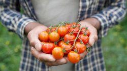 トマトを通じて、食品ロス削減アクションを食育紙芝居「おひさまトマトのトマゴロウ」が完成