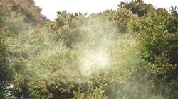 2015年 春の花粉飛散予測