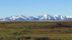 北極ツンドラにおける水銀の吸収