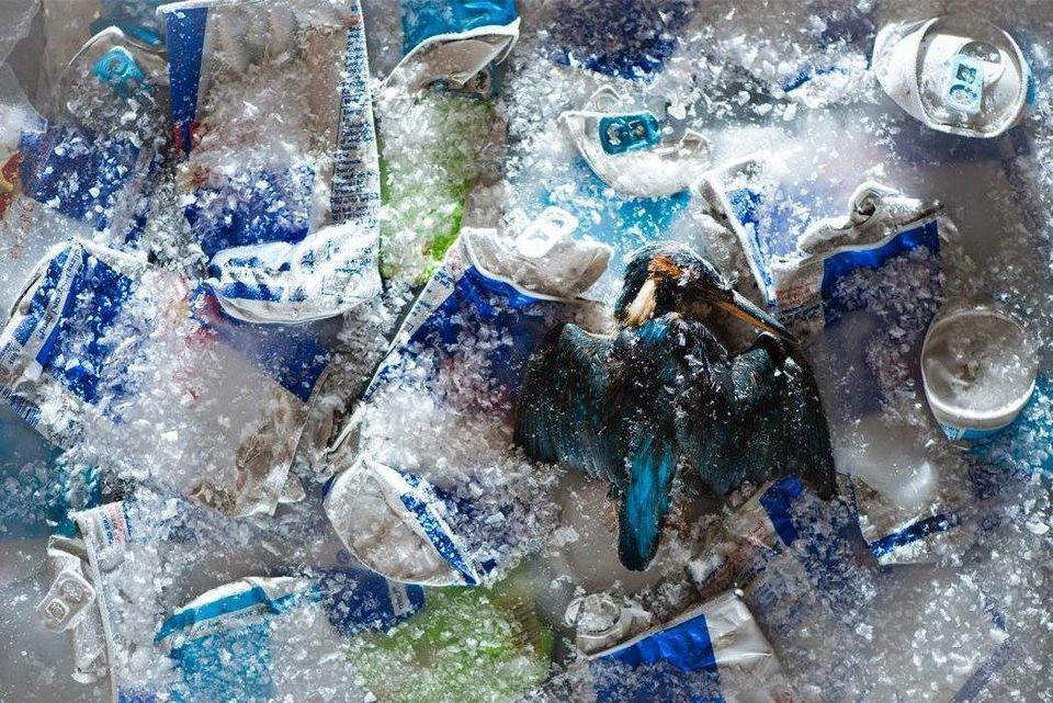 人間が捨てたゴミは、野生動物にこんな暮らしをさせている(画像)