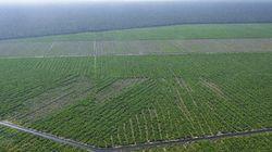 インドネシアの植林地にIFCC/PEFC認証 WWFが懸念を表明