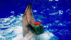 イルカの入手「追い込み漁はダメ」に反発、新江ノ島水族館がJAZA脱退