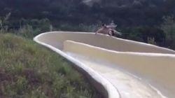 ウォータースライダーを滑っていた男性、勢い余って崖に落ちる(動画)