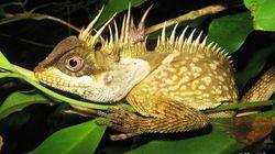メコン川流域で163種の新種を発見!最新報告を発表