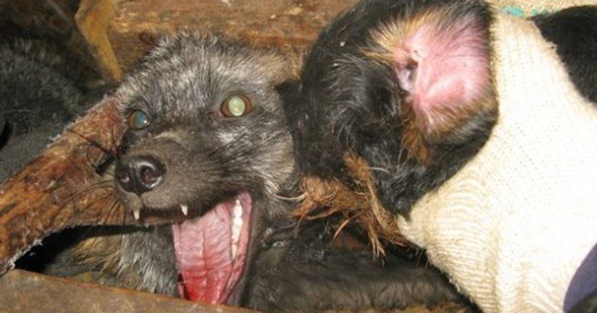 ニュース 動物 虐待 昨夏、池田詩梨ちゃん衰弱死の家庭で13匹の猫がネグレクト… 改めて動物虐待を考える(石井万寿美)