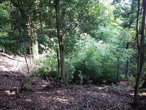実験的な防鹿柵設置後10年の春日山原始林。シカが入れない柵内には、本来の林床植生ではない先駆種と外来種のナンキンハゼが侵入している=前迫ゆりさん提供