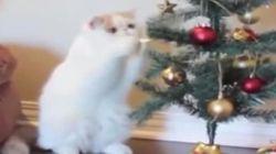 難攻不落のクリスマスツリーに挑む猫 長年の宿敵が死闘を繰り広げる(動画)