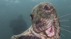 【奇跡の瞬間】海の中の動物たちがフォトジェニックすぎる。