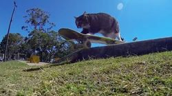 猫だって、スケボーを楽しんじゃいなよ(動画)