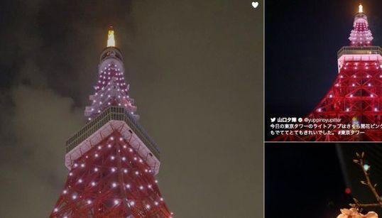 東京タワーがピンク色に染まる 桜開花で一夜限定ライトアップ(画像集)