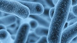 アミノ酸を1つ置き換えるだけで、菌は水深1万メートルに耐えるようになる(研究結果)