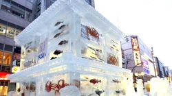 さっぽろ雪まつり「魚氷」展示中止を検討