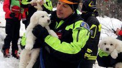 イタリアで雪崩のホテルから子犬3匹を5日ぶりに救出(動画)